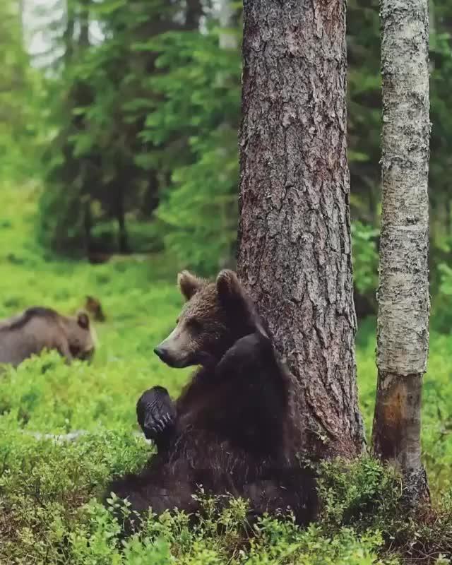 nature, Werewolf bear hybrid? GIFs