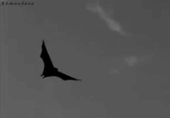 Watch and share Bat GIFs on Gfycat