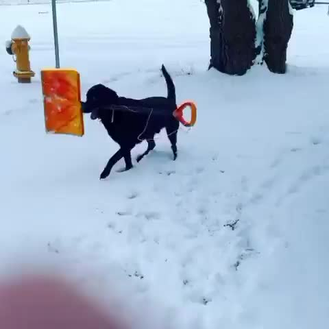 Watch and share Shovel GIFs and Snow GIFs by Thund3rbolt on Gfycat