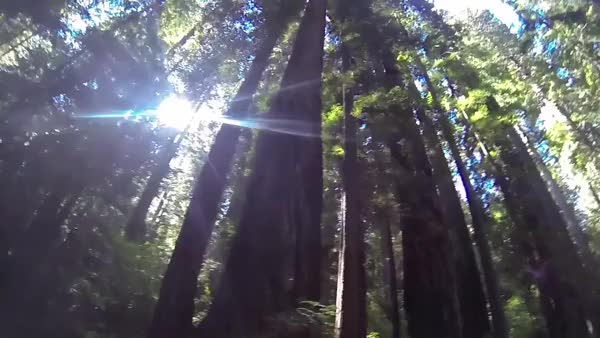 Watch and share Redwoods (reddit) GIFs on Gfycat