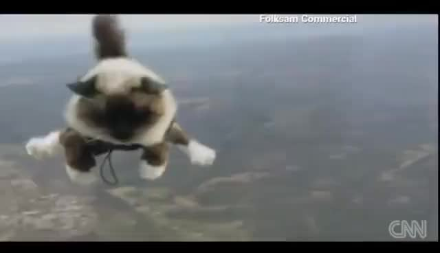Watch and share Skydiving Cats Cause Uproar GIFs on Gfycat