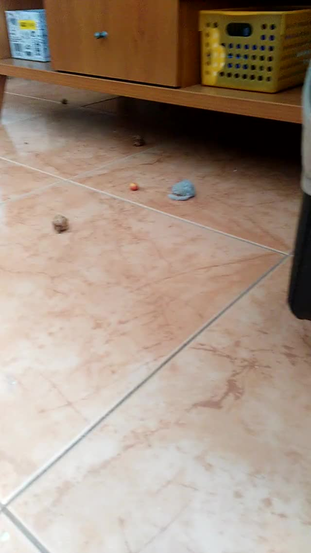 Watch VID 20180406 142417 GIF on Gfycat. Discover more related GIFs on Gfycat