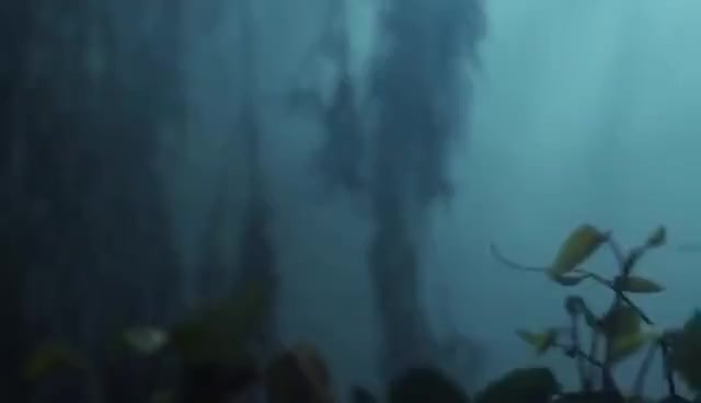 Watch and share Mastodon GIFs and Kill GIFs on Gfycat