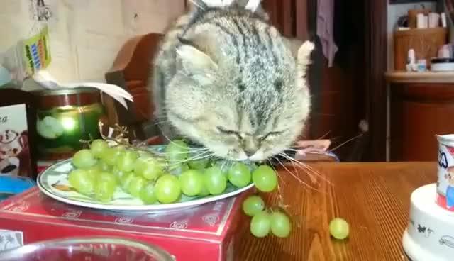 Watch and share Кошка Есть Виноград С Кроликом. GIFs on Gfycat