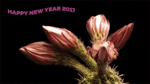 Watch Happy New Year 2017 Flower Blossom GIF Wishes images GIF on Gfycat. Discover more related GIFs on Gfycat