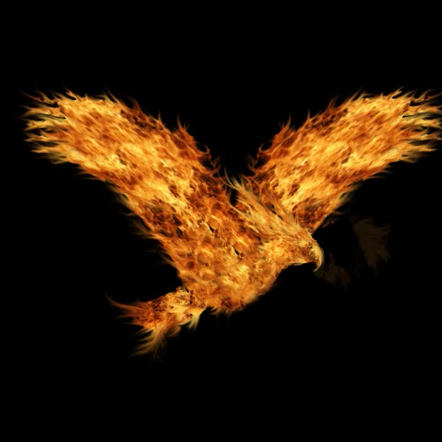 Watch and share Rise Of The Phoenix GIFs on Gfycat