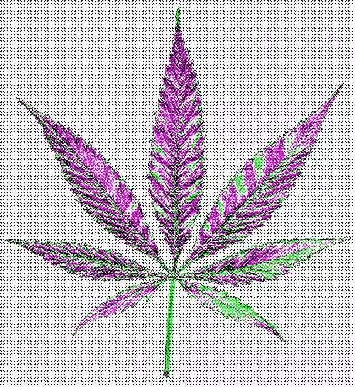 Watch and share Trippy Pot Leaf GIFs on Gfycat