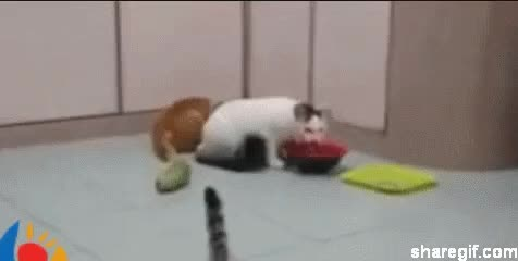 Watch and share Cat Cucumber GIFs on Gfycat