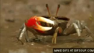 Watch this crab GIF on Gfycat. Discover more crab GIFs on Gfycat