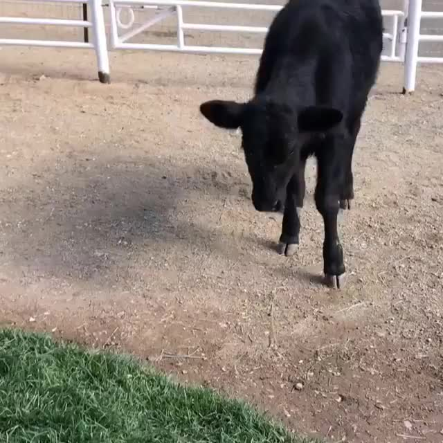 The Gentle Barn, tbt, throwbackthursday, Ferdinand learns to play ball GIFs