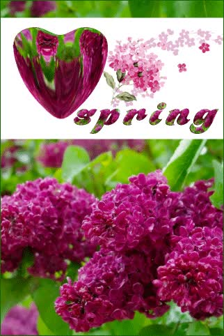 Watch spring GIF by ninisjgufi (@ninisjgufi) on Gfycat. Discover more heart, lilac, spring GIFs on Gfycat