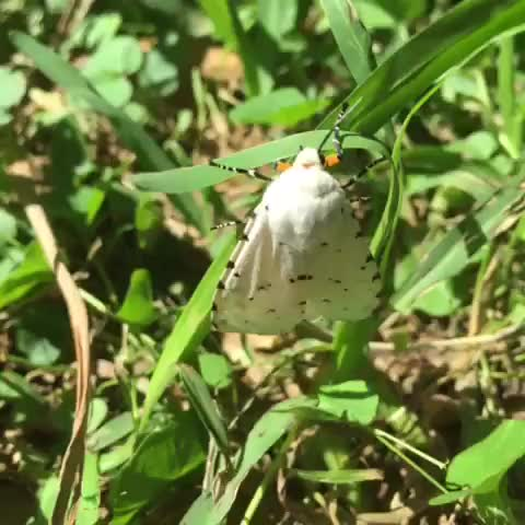 Watch and share A Moth I Found In Houston, TX GIFs on Gfycat