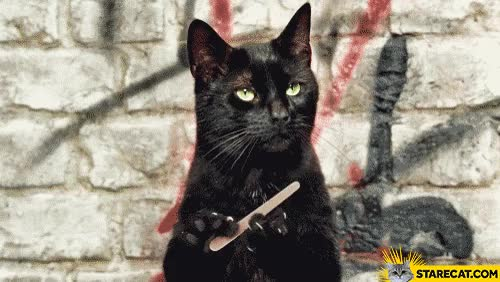 Watch Cat sharpening nails claws filling GIF animation GIF on Gfycat. Discover more related GIFs on Gfycat
