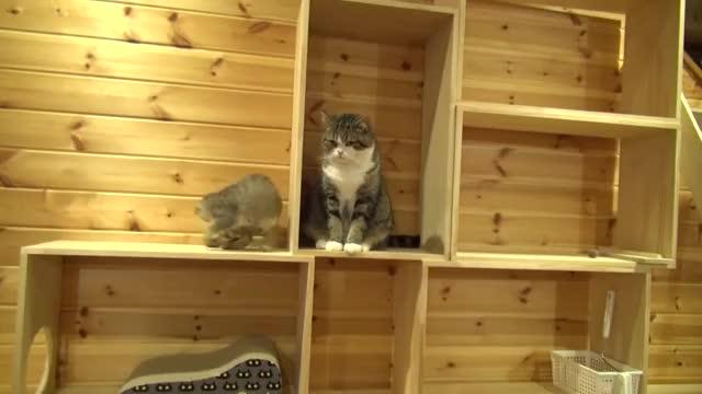 Watch Amazing Maru. GIF on Gfycat. Discover more MEOW_IRL, kitty, maru GIFs on Gfycat