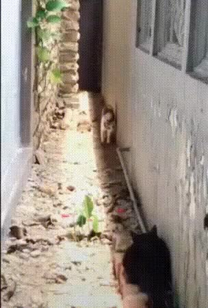 Watch s GIF on Gfycat. Discover more related GIFs on Gfycat