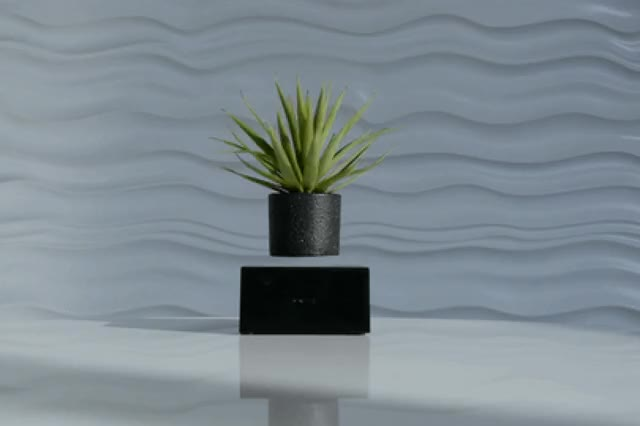 Watch and share Plant On White GIFs on Gfycat