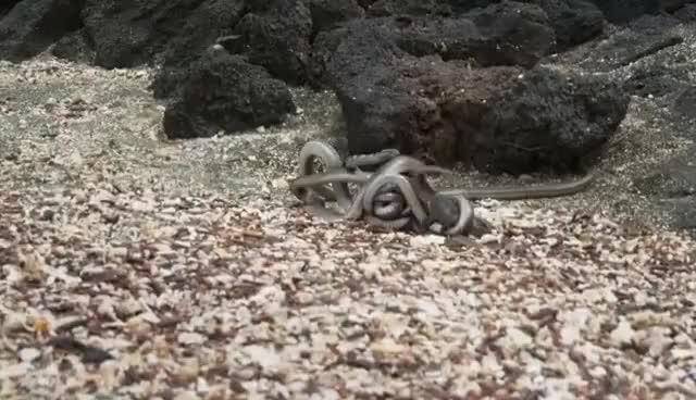 Watch and share Iguana Gets Away GIFs on Gfycat