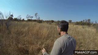 Watch Real lion hug GIF on Gfycat. Discover more eyebleach GIFs on Gfycat