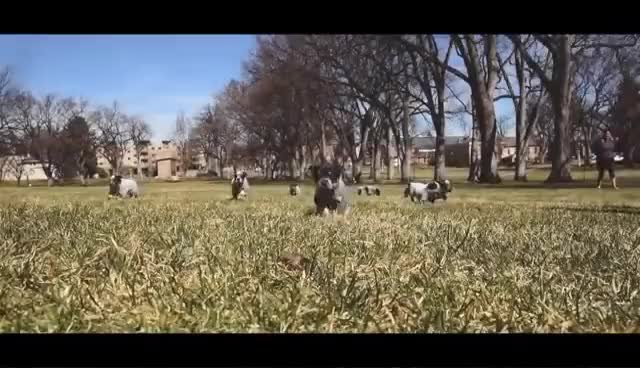 Watch and share Puppies On The Oval - Colorado State University GIFs on Gfycat
