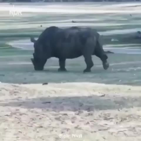 Watch and share Rhino GIFs on Gfycat