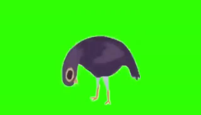 Watch and share Trash Dove (Green Screen) GIFs on Gfycat