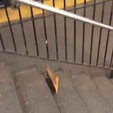 Watch New York City rat taking pizza home on the subway (Pizza Rat) GIF on Gfycat. Discover more related GIFs on Gfycat