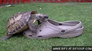 Watch and share Crocs GIFs on Gfycat
