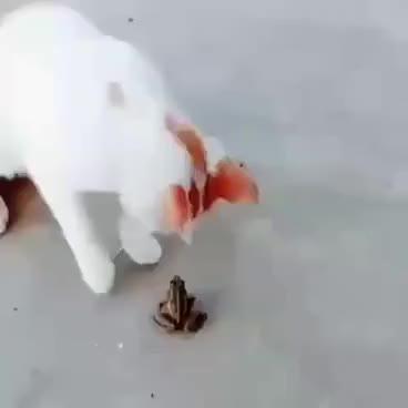 Watch and share Милые Кошки,приколы С Кошками,кошка Играет GIFs on Gfycat