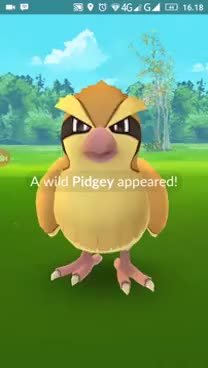Watch How to catch Pidgey - Pokemon Go GIF on Gfycat. Discover more related GIFs on Gfycat