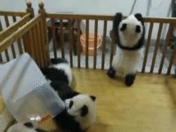 Cutest Panda Gifs GIFs