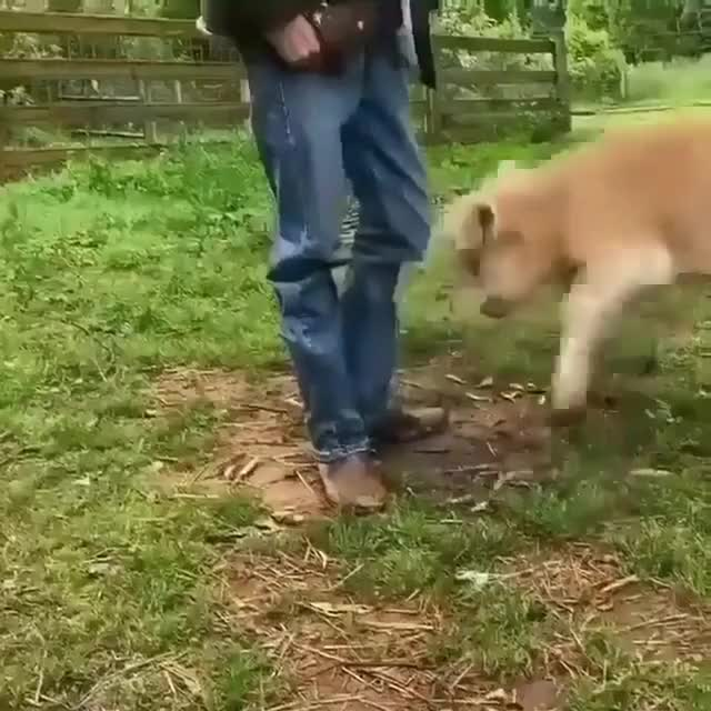 Watch and share Calf Wants To Play GIFs by lnfinity on Gfycat