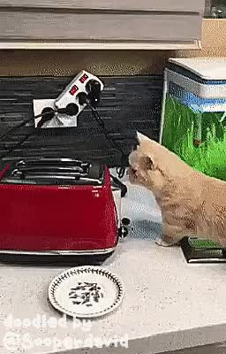 Watch and share Real Life Doodles GIFs and Cat GIFs by sooperdavid on Gfycat