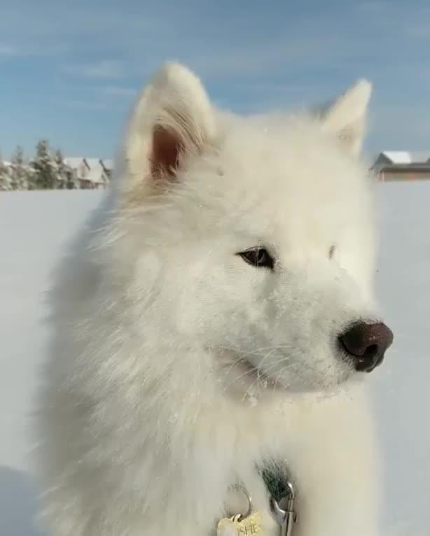malpo10, Snowy awoo GIFs