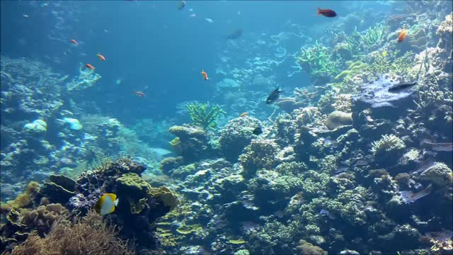 Watch and share Burgers' Zoo Reef Tank GIFs by Limosa on Gfycat