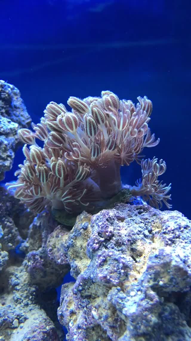 Watch and share Reeftank GIFs on Gfycat