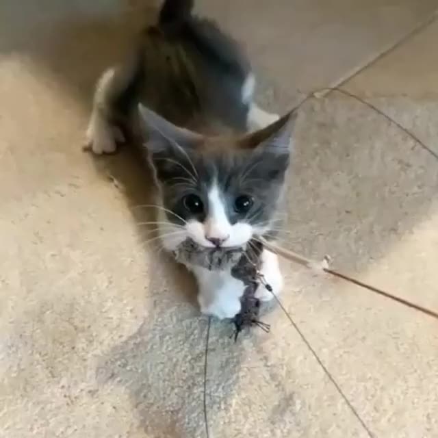 Watch and share Cute GIFs and Cat GIFs by LimeLights  on Gfycat