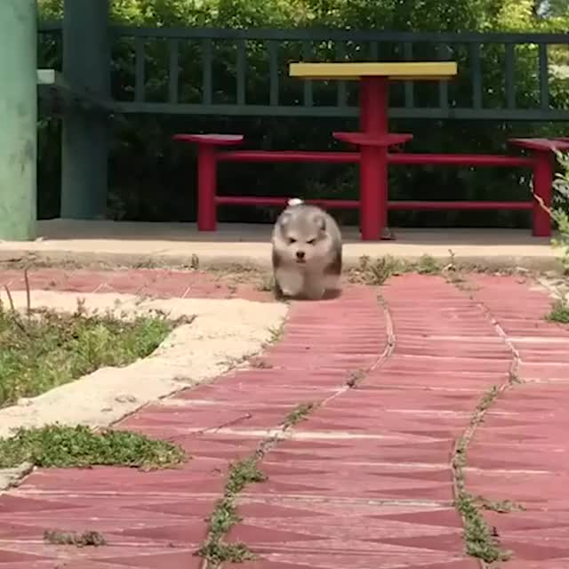 Watch and share Me When There's A Minor Inconvenience  Via 9GAG Cute GIFs on Gfycat