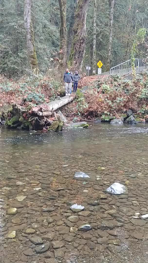 Watch and share WCGW If I Try To Get A Better View Of The Salmon Run With My Kid. GIFs on Gfycat