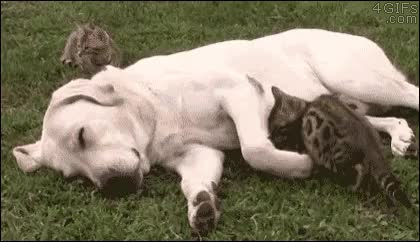 Watch and share Nap Time GIFs on Gfycat