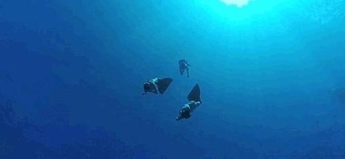 ballena, biologia marina, gif, gopro, my gif, oceano, whale, Un Cerebro Hambriento GIFs