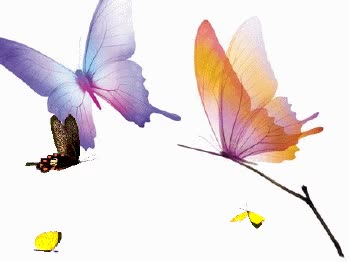 Watch and share Butterfly GIFs on Gfycat