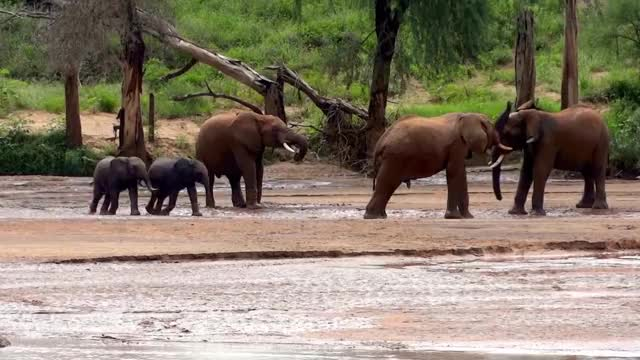 Watch and share Save The Elephants GIFs and Baby Elephants GIFs by PM_ME_STEAM_K3YS on Gfycat