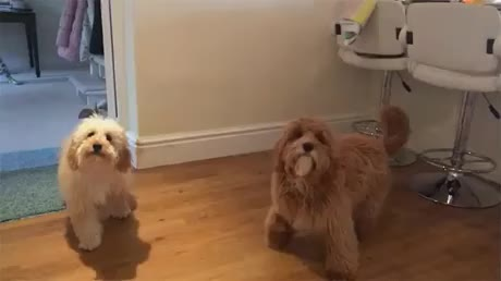 dogs, funny, He tried his best GIFs