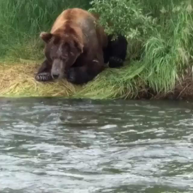 Watch and share Fishin' GIFs by troublepaw on Gfycat