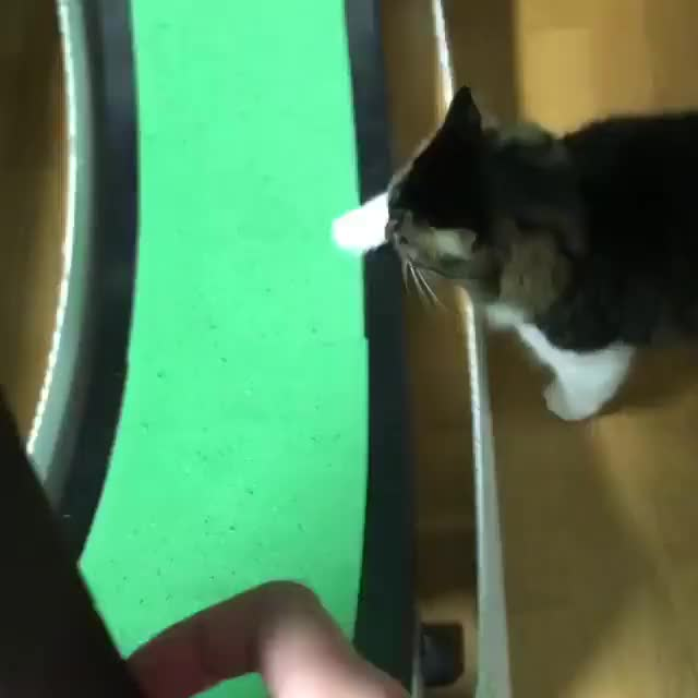 Watch Rosie doing her cardio!💪 GIF by Koleandra (@koleandra) on Gfycat. Discover more cat, cats, lilothehusky, rosie GIFs on Gfycat