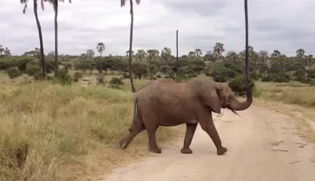 Elephant, Elephant GIFs