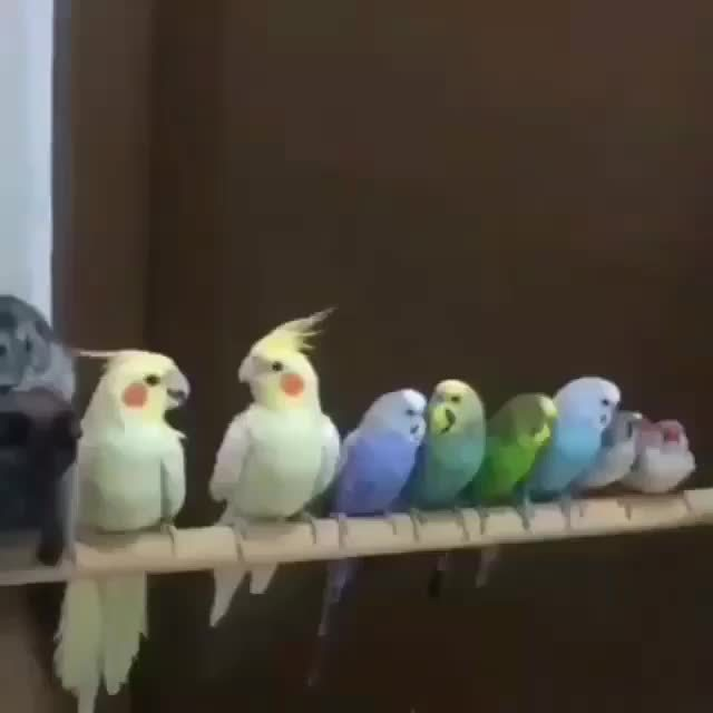 thisismylifenow, Video by babyanmals GIFs