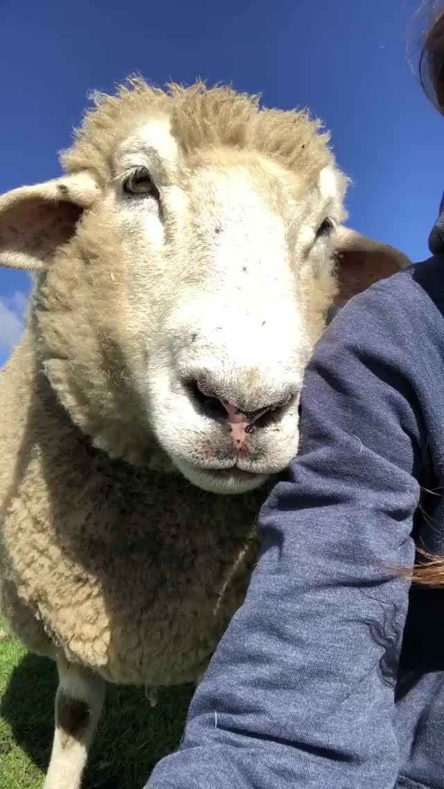 Watch and share Edgar's Mission Farm Sanctuary In Australia GIFs by b12ftw on Gfycat