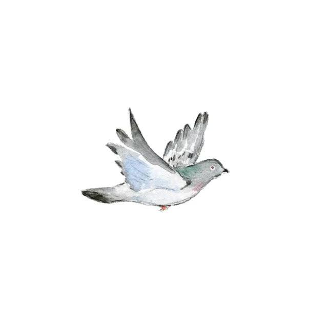 Гифка голубь летит