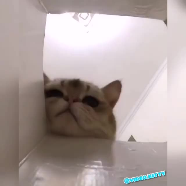 Watch and share Animallover GIFs and Animalprint GIFs by Artmia on Gfycat